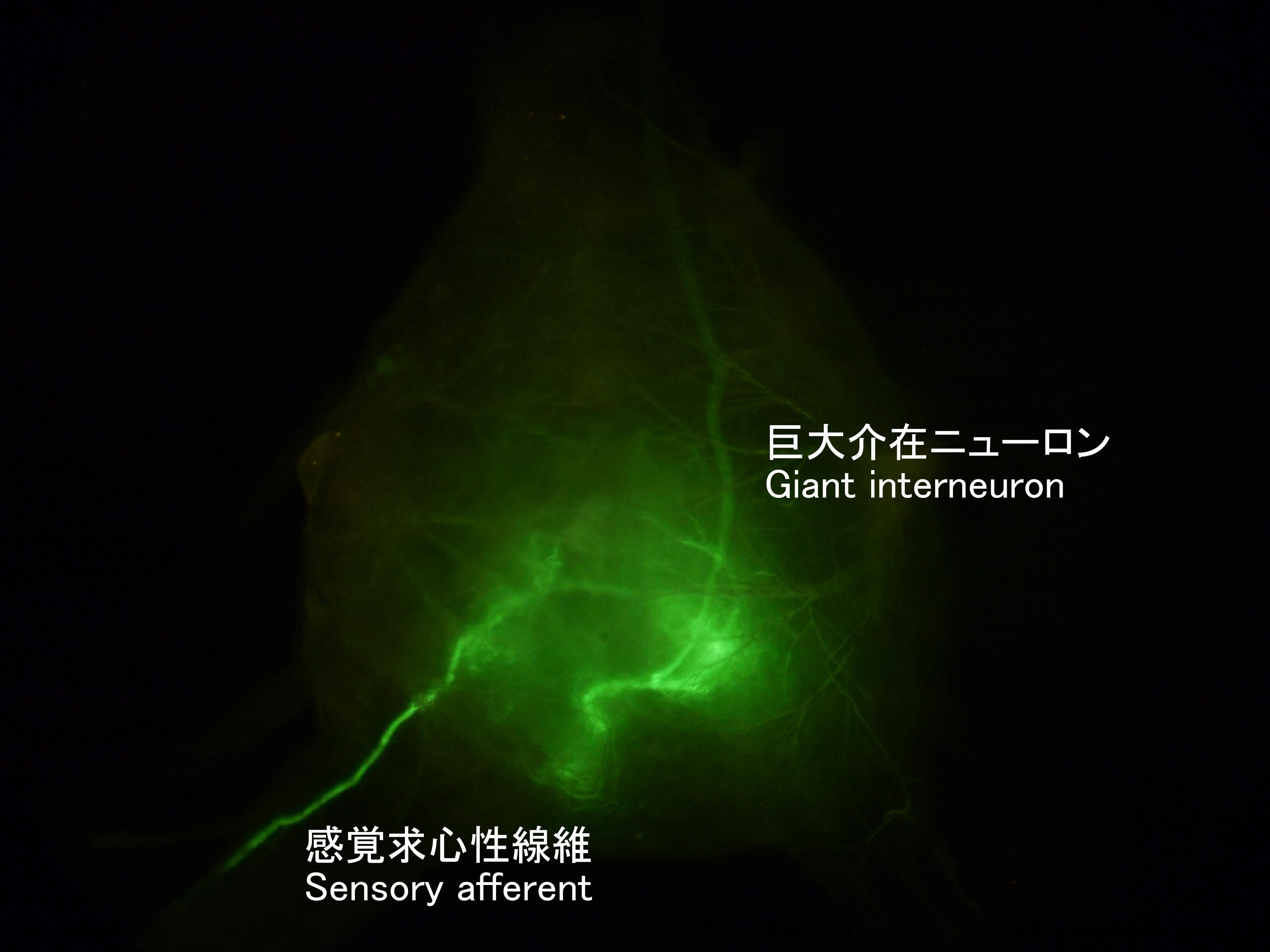 study-image-3